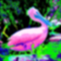 Picture of a abstract rendition of a pelican as a fine art nature print for the wall of your home or office.