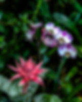 Picture of a pink bromeliad and lilac orchids as fine art prins for the walls of your home or office.