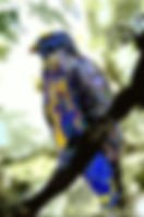 Digital representation of a hawk as a fine art nature print for the wall of your home or office.