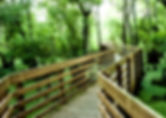 Picture of a section of the boardwalk in Tampa, Florida's Lettuce Lake Park as a fine art nature print for the wall of your home or office.