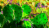 Digital representation of prickly pear cactus as a fine art print for the wall of your home or office.