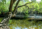 Picture of a swimming hole on the Withlacoochee River in Florida as a fine art nature print for the wall of your home or office.