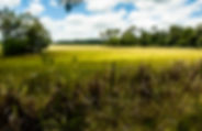 Picture of a sun kissed pasture at the bottom of Chinsegutt Hill near Brooksville, Florida as a fine art nature print for the wall of your home or office.