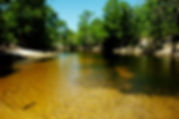 Picture of a wide spot in Florida's lower Withlacoochee River that's perfect for a swim as a fine art nature print for the wall of your home or office.