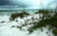 Digital picture of Greer Island Park on Long Boat Key, Florida after a storm as a fine art print for the wall of your home or office.