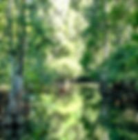 Picture of the start of the Hillsborough River narrows in Tampa, Florida's Lettuce Lake Park as a fine art nature print for the wall of your home or office.