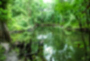 Picture of the Hillsborough River in Tampa, Florida's Morris Bridge Park as a fine art nature print for the wall of your home or office.