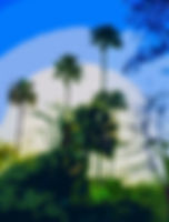 Digital picture of the palms in the interior of Florida as a fine art nature print for the wall of your home or office.