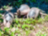 Pictures of armadillos as fine art nature prints for the wall of your home or office.