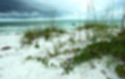 Picture of Greer Island Park on Long Boat Key, Florida after a storm as a fine art print for the wall of your home or office.