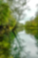 Picture of the Withlacoochee River at the River Junction Recreation Area in west central Florid as a fine art nature print for the wall of your home or office.
