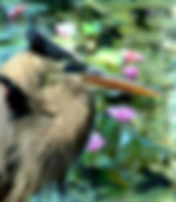 Digital representation of a great blue heron napping beside a lily pond as a fine art nature print for the wall of your home or office.