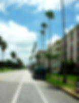 Picture of a palm lined St. Petersburg, Florida street as a fine art print for the wall of your home or office.