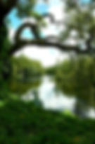 Digital picture of a section of the Hillsborough River in Temple Terrace, Florida as a fine art print for the wall of your home or office.