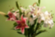 Still life picture of pink perfection and casa blanca lilies as a fine art nature print for the wall of your home or office.