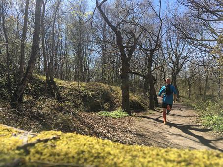 Wonderful forest run