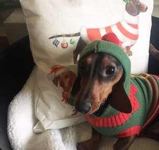 Blogmas Day 11- Pips 1stChristmas