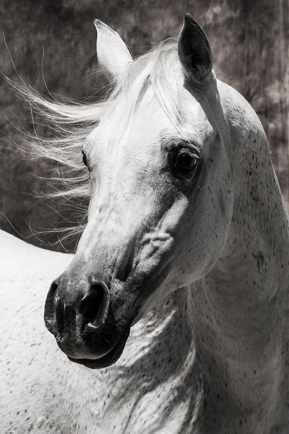 Katja Mayer Photography-205-104.jpg