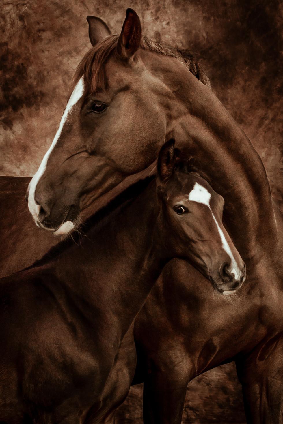 Katja Mayer Photography-205-56.jpg