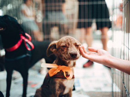 What Does an Animal Law Paralegal Do?