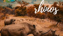 World Rhino Day!