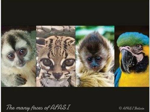 Poster animals AFASI
