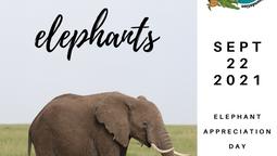 Elephant Appreciation Day!