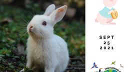 Rabbit Day!