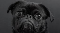 National Black Dog Day!