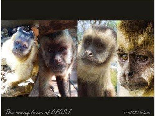 Poster Capuchin Monkeys II