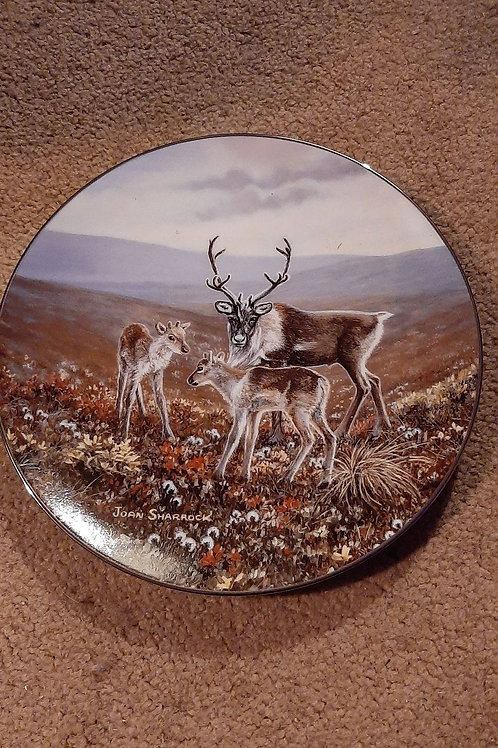 Elk family collectable plate