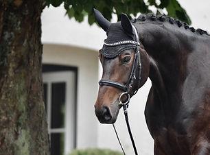 Verkaufspferd Dressurpferd Stute Schleswig-Holstein