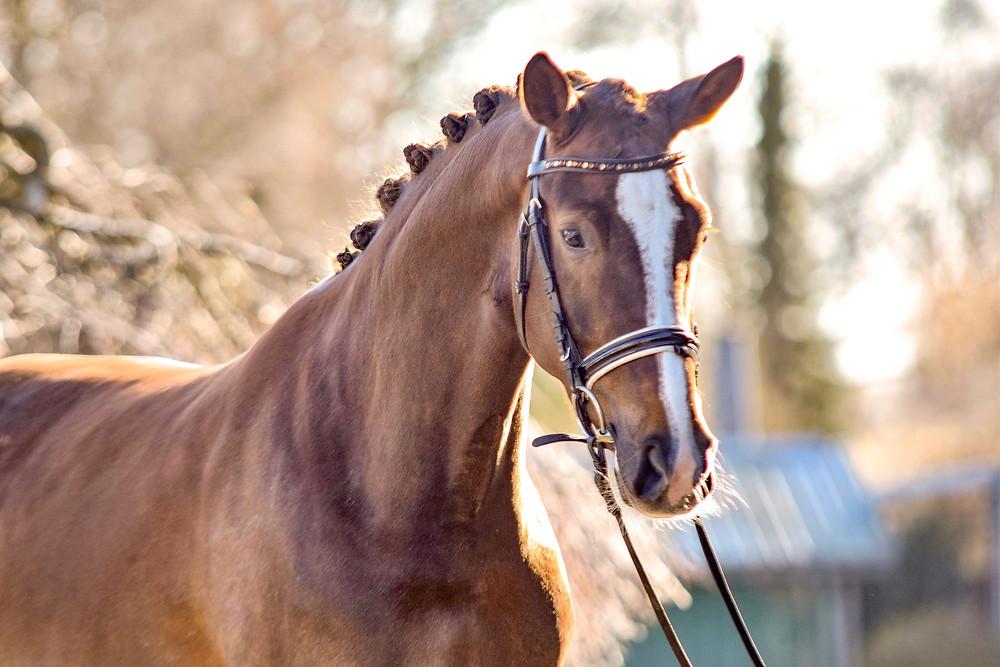 Kleinsolter Turniertage | Jungpferdeturnier | Reitpferdeprüfungen | Dressurpferdeprüfungen | Springpferdeprüfungen