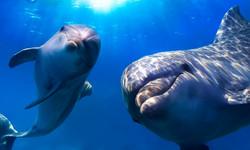 gay-dolphins-underwater.jpg