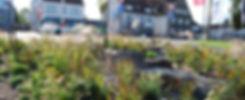 2019-10-02_WerrePark_BO__Staudenmischpfl