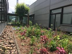 2019-06-04_Blase-Siebdruck_Bepflanzung_C