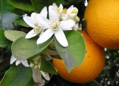 Large Orange Blossom Candle