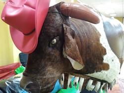 aluguel touro mecânico