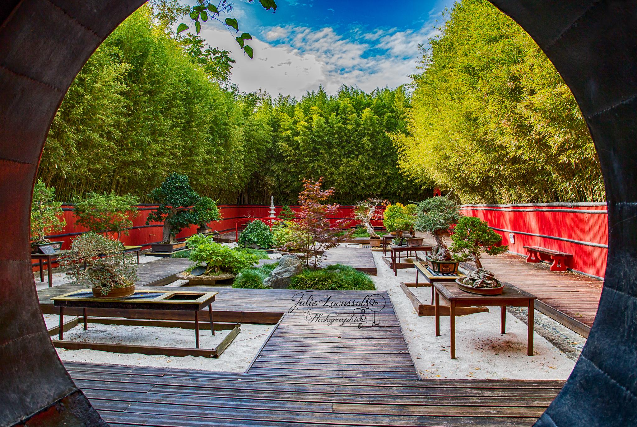 Jardin Japonais ; BonzaÏ