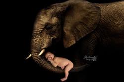 Bébé sur Elephant Charente