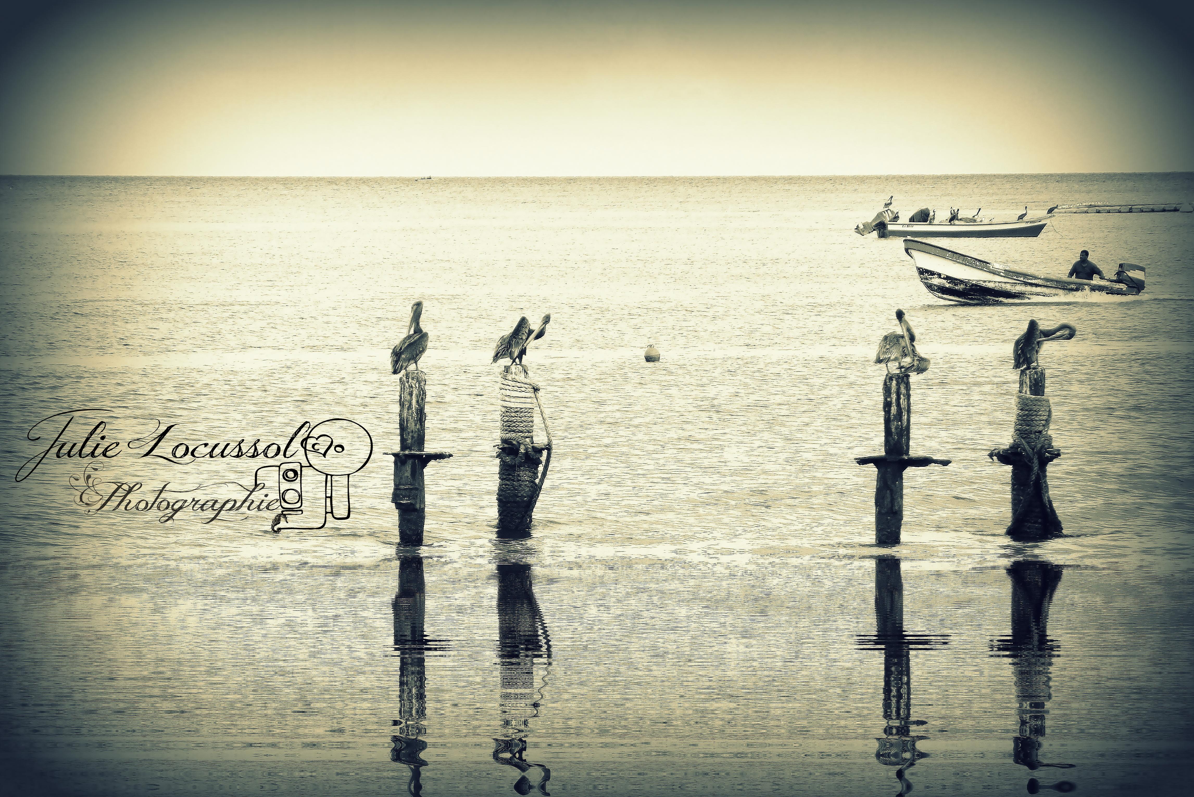 Les Pélicans à l'épreuve des poteaux
