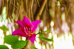 Fleur d'un arbre à Orchidées