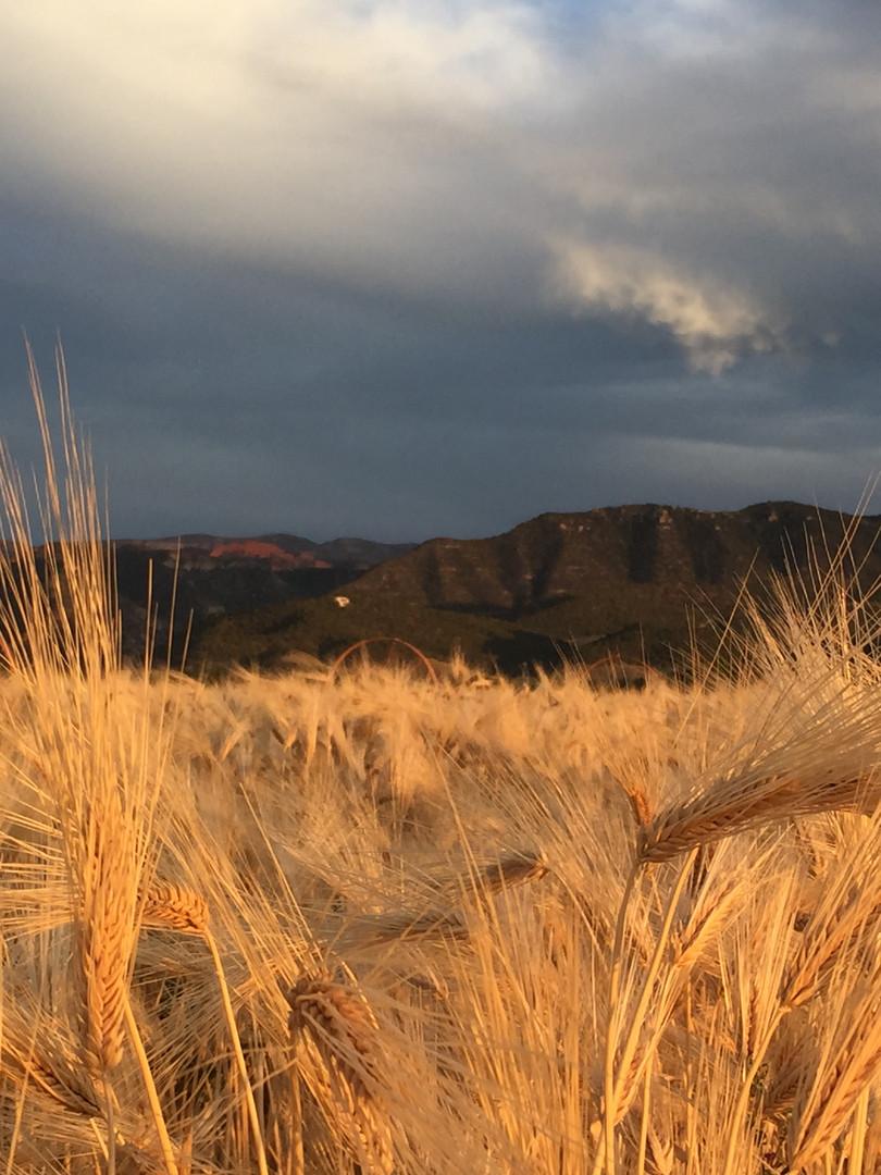 Farming in the Parowan Valley