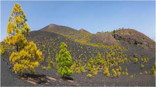 Vulkan Martin-1-2.jpg