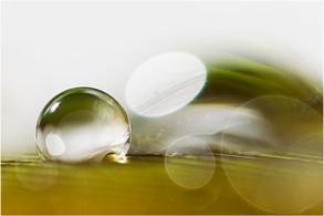 10024 Wassertropfen auf Feder 7.jpg