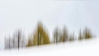 20056 Bäume im Schnee.jpg