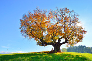 20125 Herbst.jpg