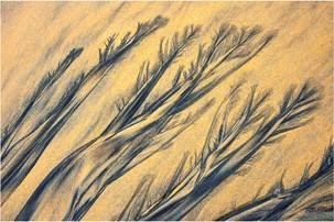 20014 Sandzeichnung.jpg