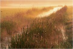 Nebelschilf.tif