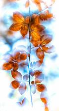 10054 Herbstlich.jpg